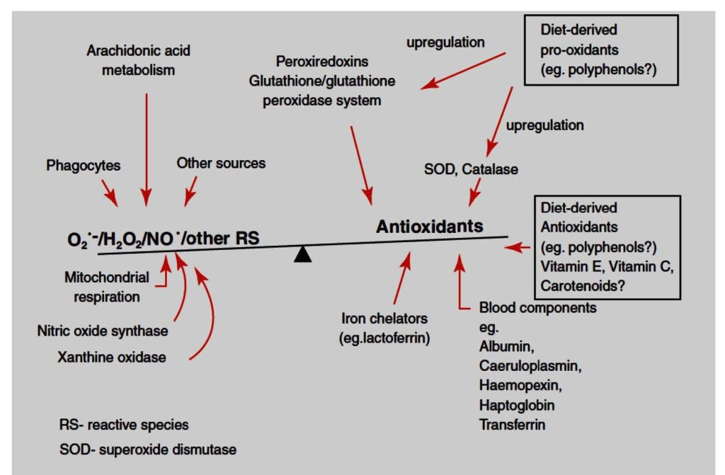 Figure 1: Balance of antioxidants and reactive species (RS) in vivo. Adapted from [12] with permission from Elsevier.