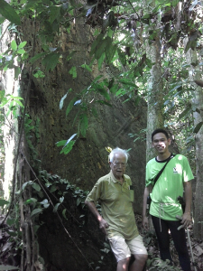 Resting in Krau Forest Reserve