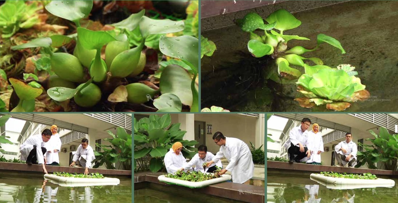 Figure 3 The authors working with their Floating Treatment Wetland (FTW).