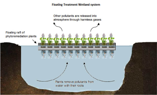 Figure 2 Schematic diagram of how Floating Treatment Wetland (FTW) system processes the pollutants