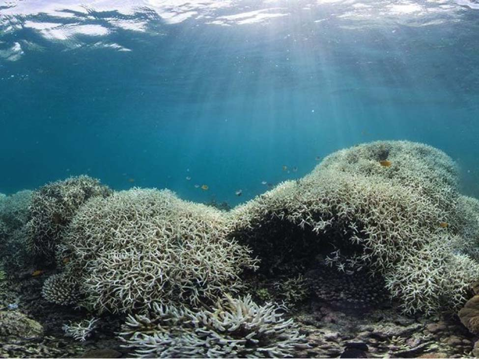 The nearing demise of the Great Barrier Reef