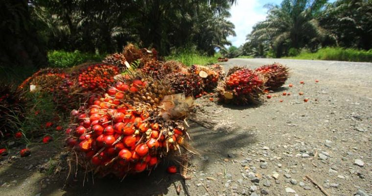 Palm oil and the environment