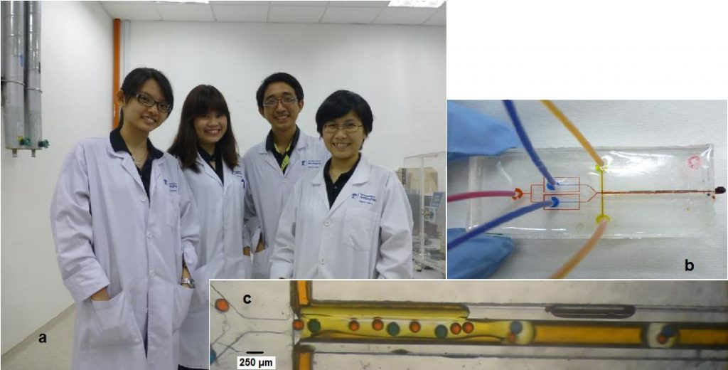 Figure 1: (a) Undergraduate research students who worked on double-emulsion in microfluidics. From left: Lim Chang Nong, Tan Xinyi, Jared Chong Sh'ng Yuan and Lee Pay Herng. (b) Microfluidic device for double-emulsion. Red input is the silicone oil while Blue and yellow streams are distilled water with dyes respectively. (c) Blue and red droplets of different sizes encapsulated in flow segments.