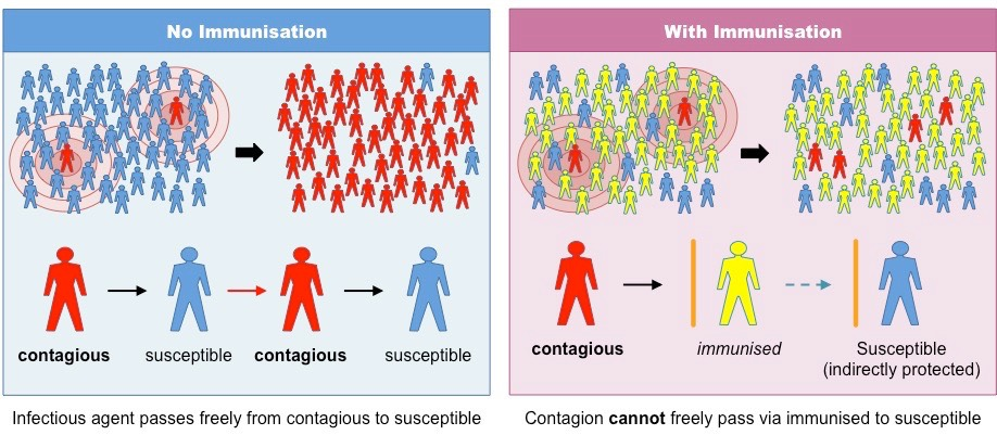Figure 1: Herd Immunity (image credit to Bioninja [20]).